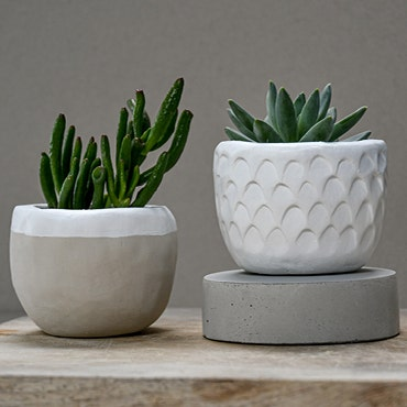 Make, mend, recycle: clay succulent pot 