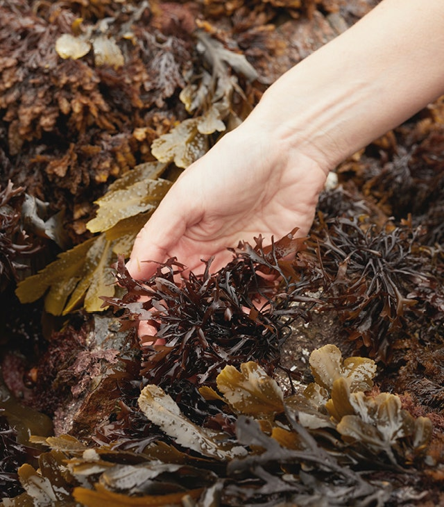 Easy Seaweed Recipes