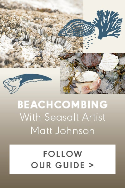 A Guide to Beachcombing